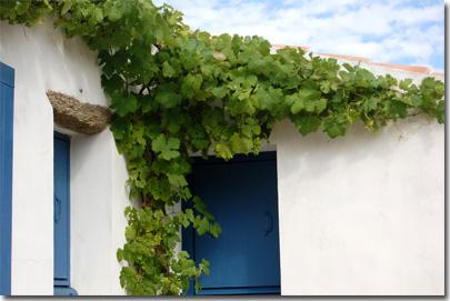 vigne à Ker Chalon